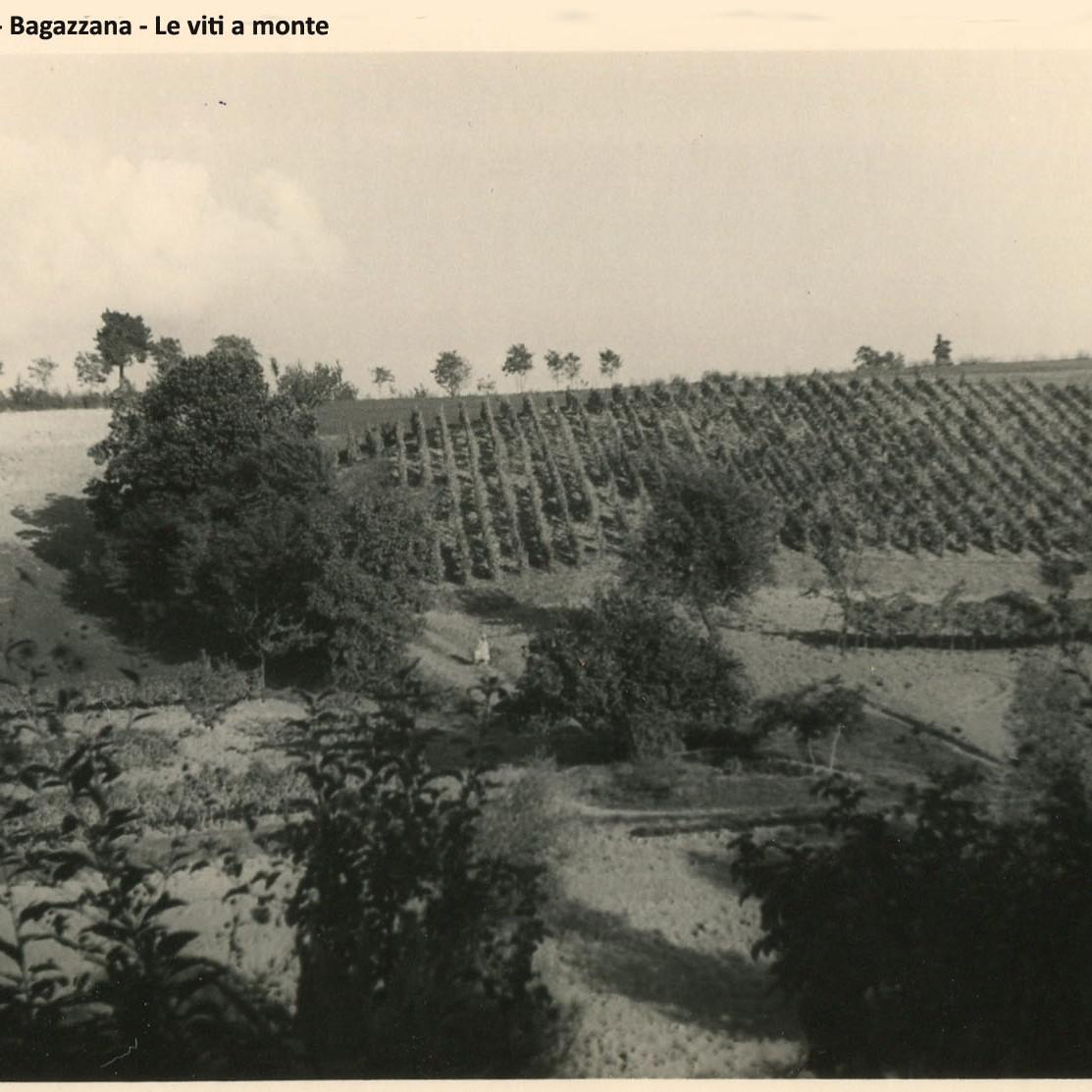 Le viti di Bagazzana nel 1958