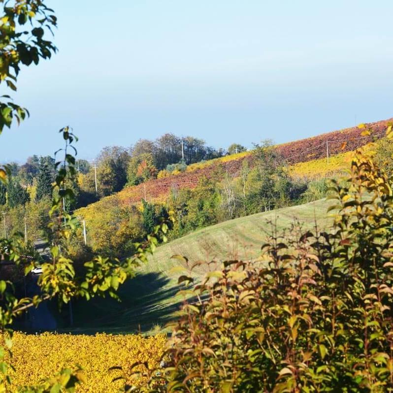 Panorama delle colline bolognesi dalla tenuta Gaggioli