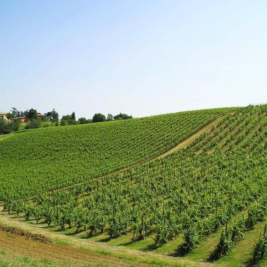 Veduta delle Vigne dell'azienda agricola Gaggioli a Zola Predosa