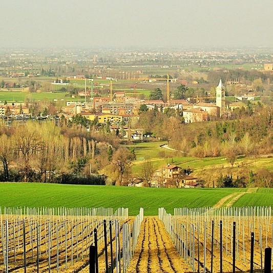 Panorama vigna tenuta Gaggioli Zola Predosa