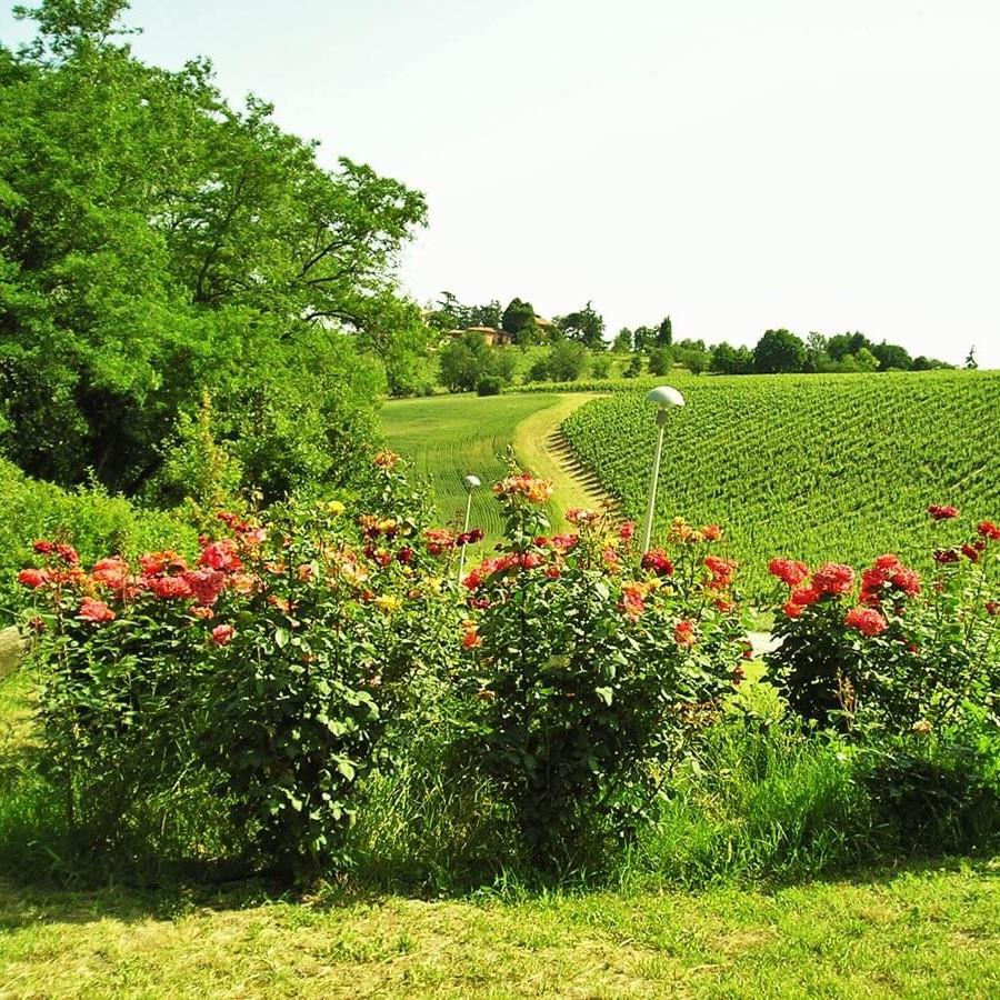 rose giugno 2010 - 5